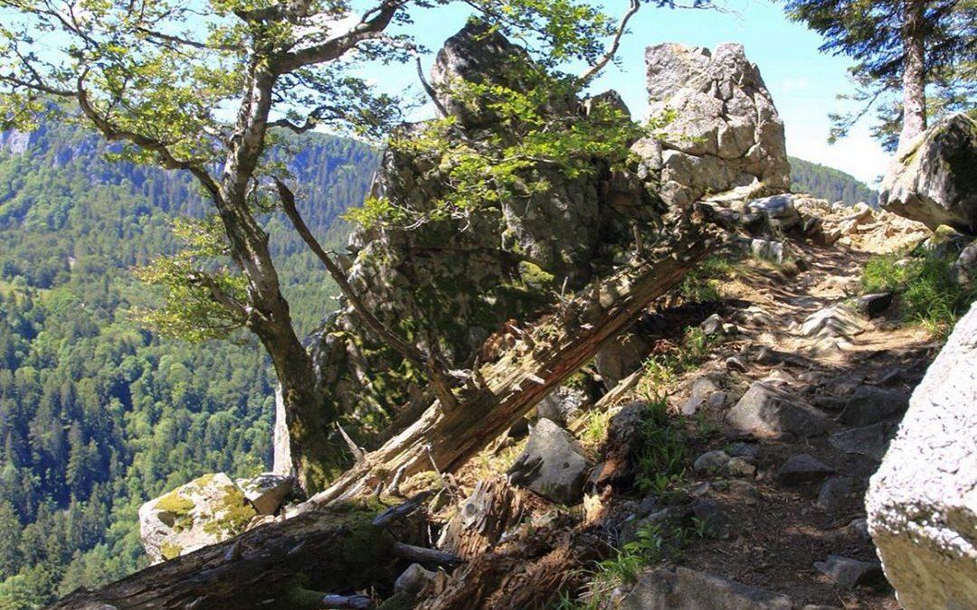 Randonnée Col de la Schlucht, sentier des roches